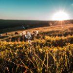 朝日と草原に咲いている一輪の素朴な花